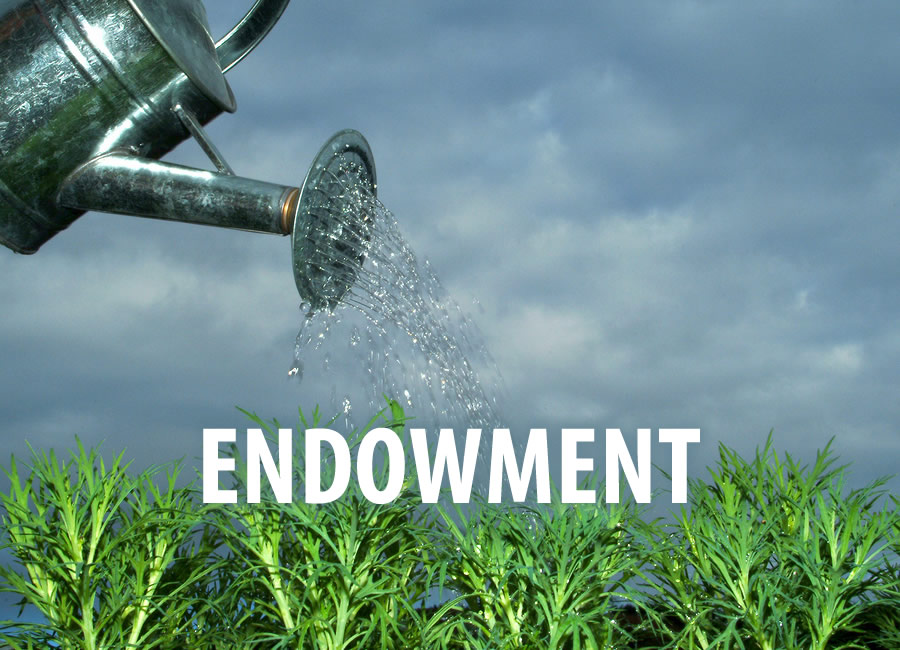 Is an endowment campaign worth it?