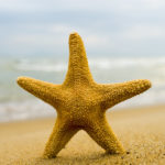 Major Gifts, Starfish and Second Chances: Small Changes Can Make Big Waves